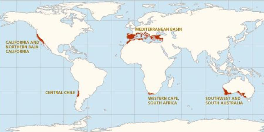 Climas mediterráneos