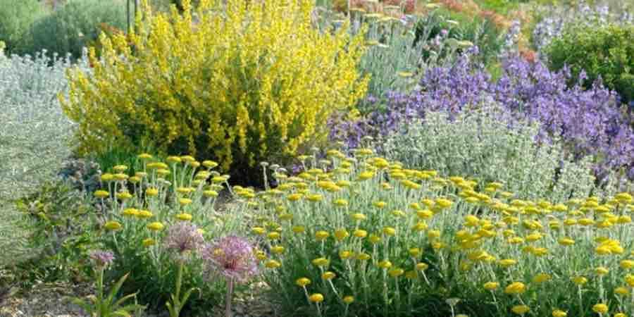 Plantas de Xerojardineria
