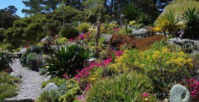 Jardin botánico con plantas xerófitas o xerófilas