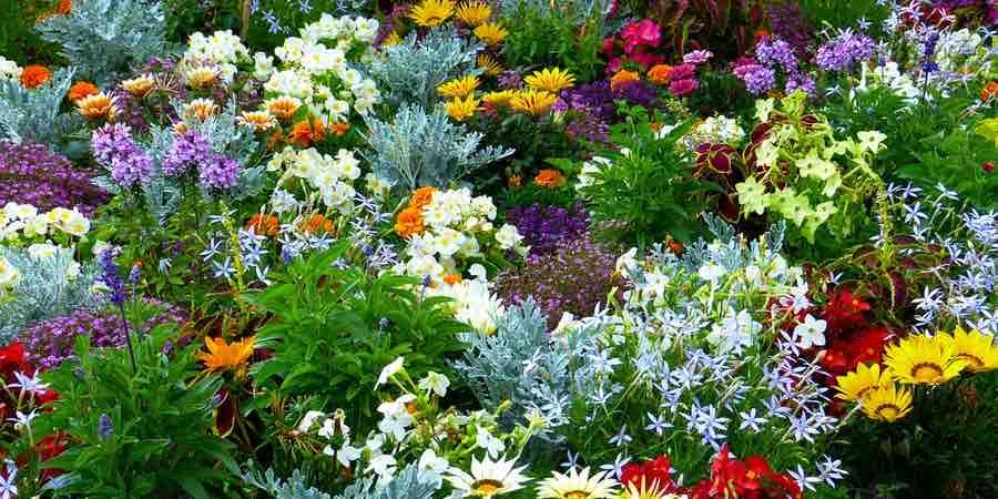 Jardin mediterraneo sostenible. Jardines mediterraneos