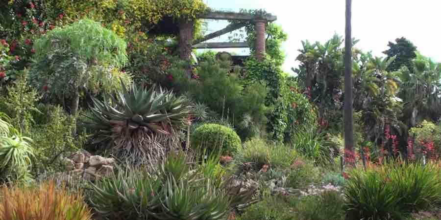 vegetacion de clima mediterraneo